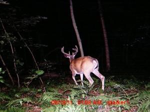 2011 buck