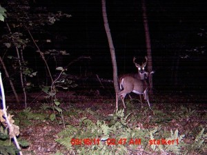 2011 buck and doe