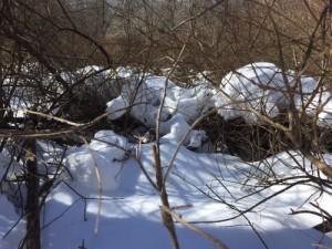 deer bed 2